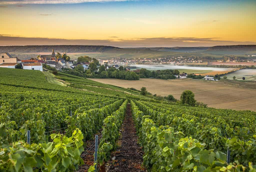 Charente, Ausblick von einem Weinberg
